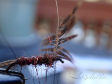 Hold the hackle verticle and begin wrapping.