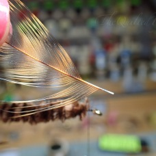 Now strip a few fibers from the stem on the side that will be laying ON the hook itself when it wrapped.