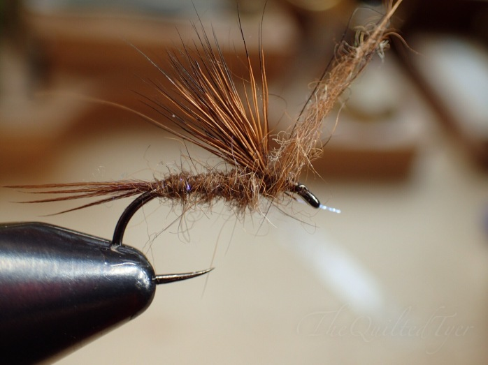 Once you have dubbed the body, return your vise to its normal position and take one or two wraps infront of the wing.